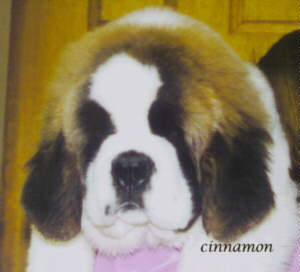 JPEG image of Cinnamon
